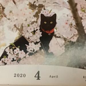 ニャンコカレンダー 2020年4月