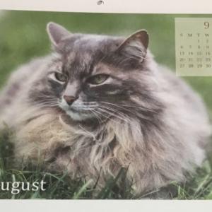 ニャンコカレンダー 明日から8月