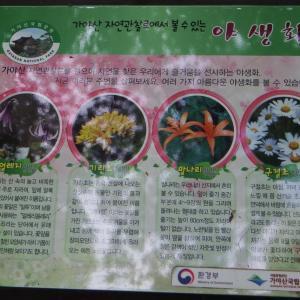 美しき野生の花 海印寺散策路10