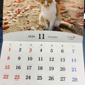 ニャンコカレンダー 2020年11月