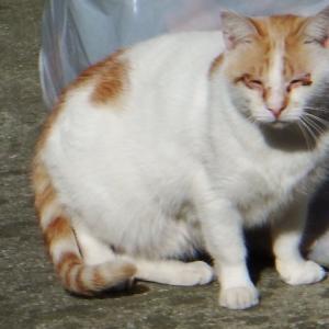 天王寺七坂番外編 大江神社の猫
