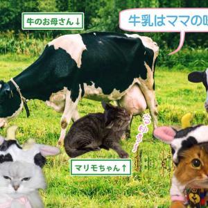 丑年で乳牛にハマっている最中に乳牛の頂き物ニャ♪