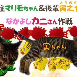 先住猫マリモと後輩の寅之介のなかよし蟹さん大作戦(6月22日の令和三年の「かにの日」忘れてました!)