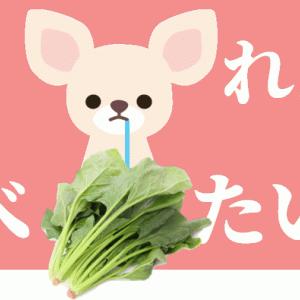 犬のほうれん草レシピと健康効果|注意点は毎日あげると尿路結石や嘔吐のリスクが上昇