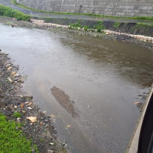 解禁前日の阿賀野川の支流を見てきた