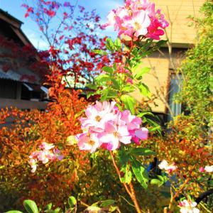 バレリーナが咲いている
