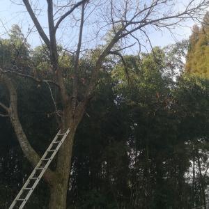 木こりになった2日間