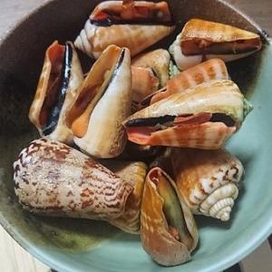 奄美の貝といえばトビンニャ