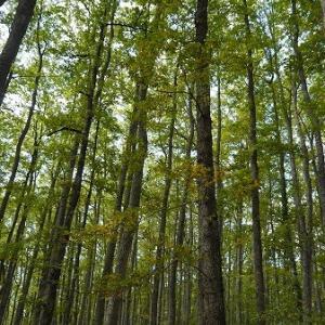 ポッリーノ国立公園で森林浴