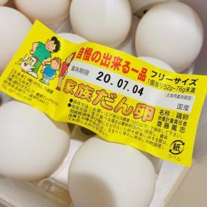 家族だん卵