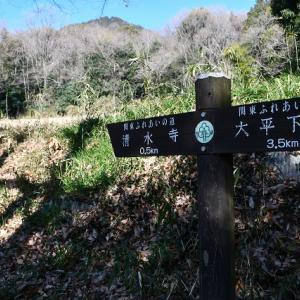 清水寺のロウバイ(栃木県)