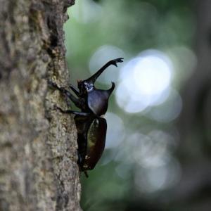 昆虫のオアシス