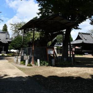 鹿島神社 空洞の大欅