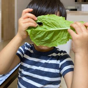 【4歳】悪夢と、息子の奇妙な食べ方…