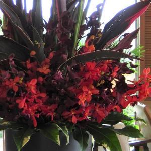 レッドジンジャー・モカラ・ドラセナで秋の赤