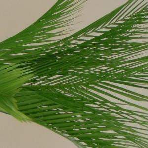 アレカヤシとモカラでスッキリグリーン活け込み