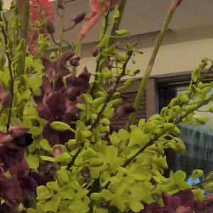 大人色のデンファレの組み合わせ:ロビー装花