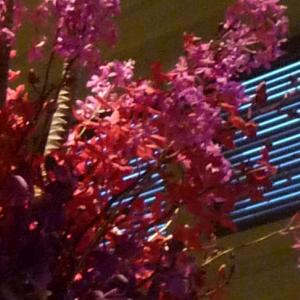 ピンクのエピデンドラムでシックなロビー装花
