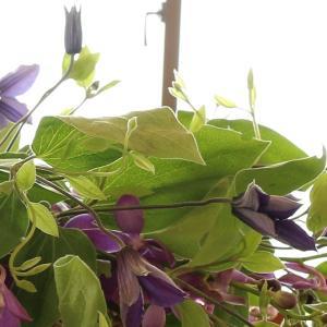 クレマチスをたっぷり使用したロビー装花
