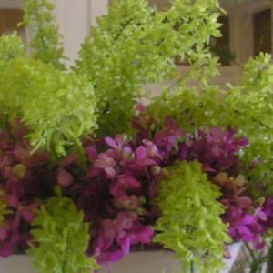 シンビジウム・グラマトフィラムでロビー装花