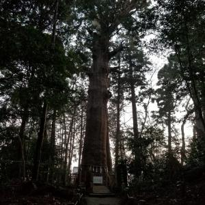 麻賀多神社の御神木