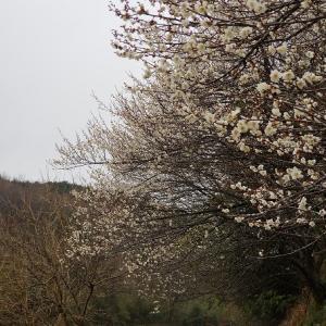 にわか雨で、芳賀富士登山が挫折