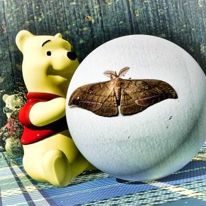 <CG>クマのプーさんと転がる蛾の球