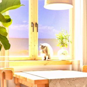 <CG>「日と海と猫」 ~真夏の雲が湧き立つ海を臨む窓辺に1匹の猫~