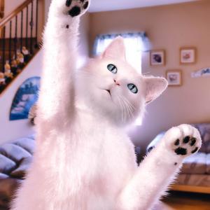 <CG>「白い猫」 ~ネットの記事からのインスピレーションで猫を描いてみた~