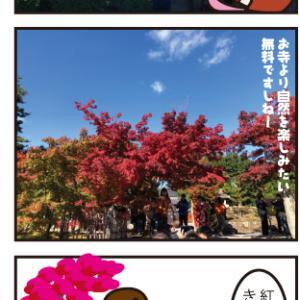 これからが見頃の紅葉