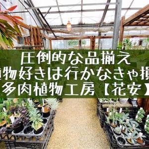 多肉植物工房「花安」九州一の品揃え!マニアックなレア品種まで何でもござれの園芸店