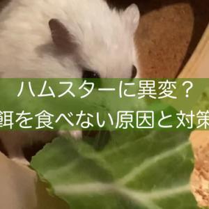 ハムスターが餌を食べない原因と対処法は?元気がない時は病気の可能性も