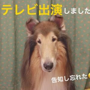 台風&テレビ出演