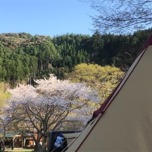 ならここの里キャンプ場の花見キャンプレポ 【卵が先か鶏が先か】
