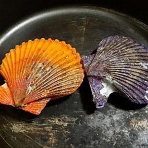貝の日々 ヒオウギ貝にサザエにアサリ 宿業・原罪は最大の贅沢の結果