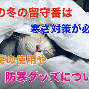 猫の冬の留守番は寒さ対策が必須!暖房の使用や防寒グッズについて