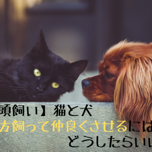 納品:おぬも 1記事目 【多頭飼い】猫と犬、両方飼って仲良くさせるにはどうしたらいい?