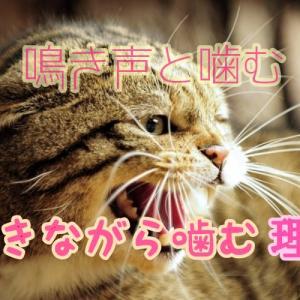 猫が鳴きながら噛むのはなぜ?鳴きながら噛む理由と鳴き声の意味とは?