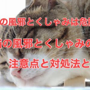 猫の風邪とくしゃみは危険?猫の風邪とくしゃみの注意点と対処法とは
