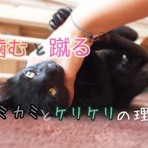 猫が噛んで蹴るのはなぜ?飼い主さんへの攻撃の理由と猫のケンカ