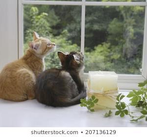 24時間 ホテル ペットシッター 猫を預けられる場所 猫と一緒に泊まれる宿