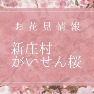 新庄村のがいせん桜通りはライトアップで夜桜もキレイ☆見ごろ・駐車場情報も!