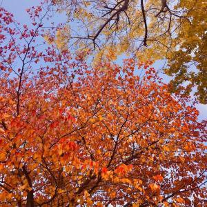札幌の秋模様。