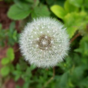 【目の痒み・鼻水】花粉症やハウスダストアレルギーには『馬油』や『ギー』が重宝しています!