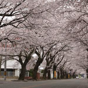 2020年、本格的に復興していく福島。