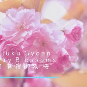 Shinjuku Gyoen Cherry Blossoms 2021 -新宿御苑 桜