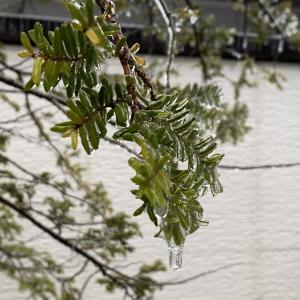 氷雨もとい雨氷