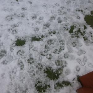 北海道温暖化??