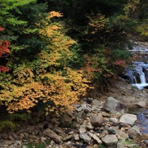 紅葉 モミの木森林公園