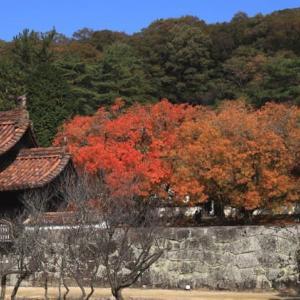 旧閑谷学校 楷の木紅葉